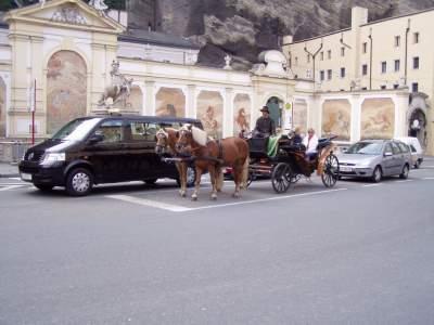 In Italia nessuno rispetta gli stop, in Austria pure i cavalli sono ligi alle regole.